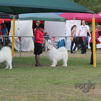 20130222 Dog Show-Canberra Royal (16 of 40)